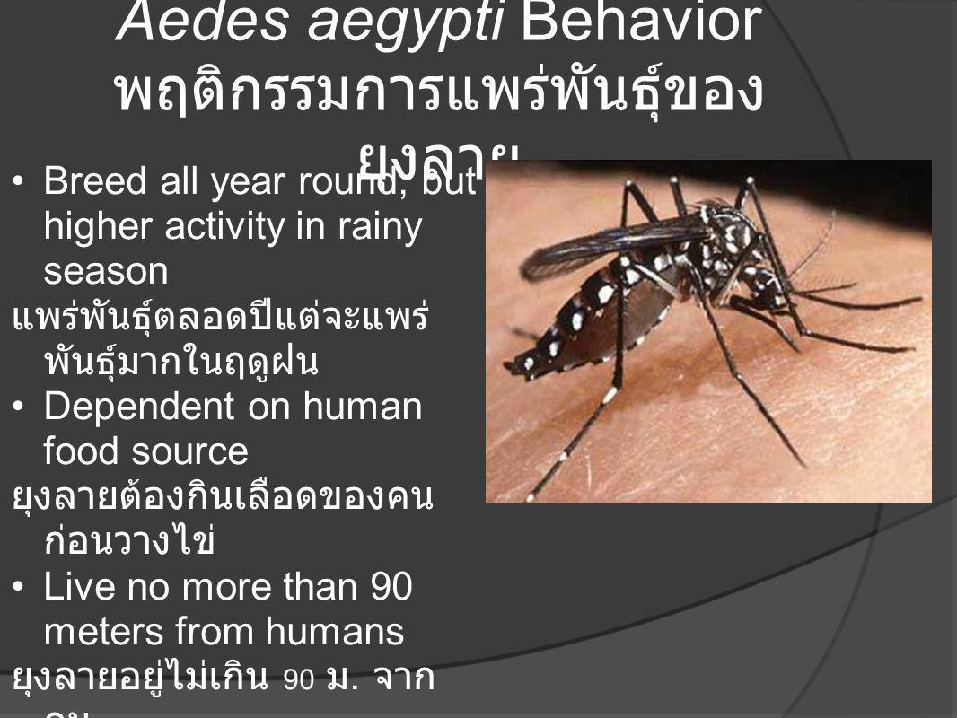 Aedes aegypti Behavior พฤติกรรมการแพร่พันธุ์ของยุงลาย
