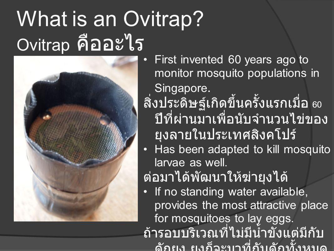 What is an Ovitrap Ovitrap คืออะไร