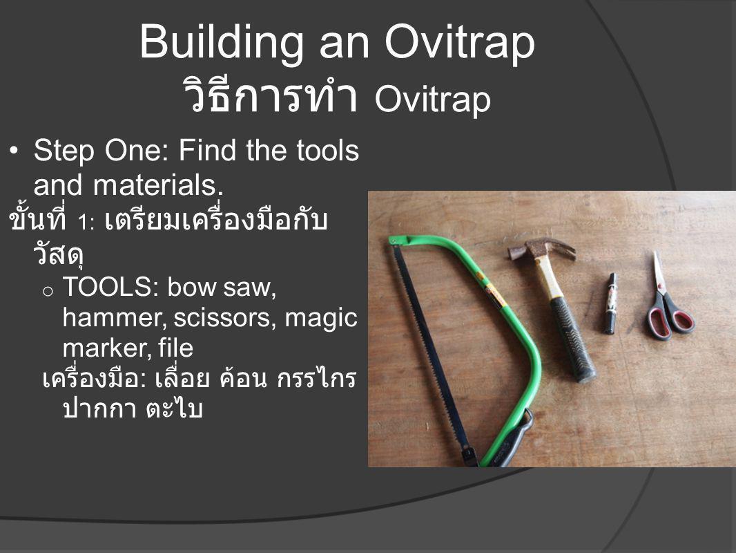Building an Ovitrap วิธีการทำ Ovitrap