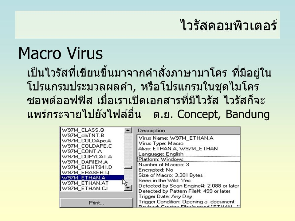 Macro Virus ไวรัสคอมพิวเตอร์
