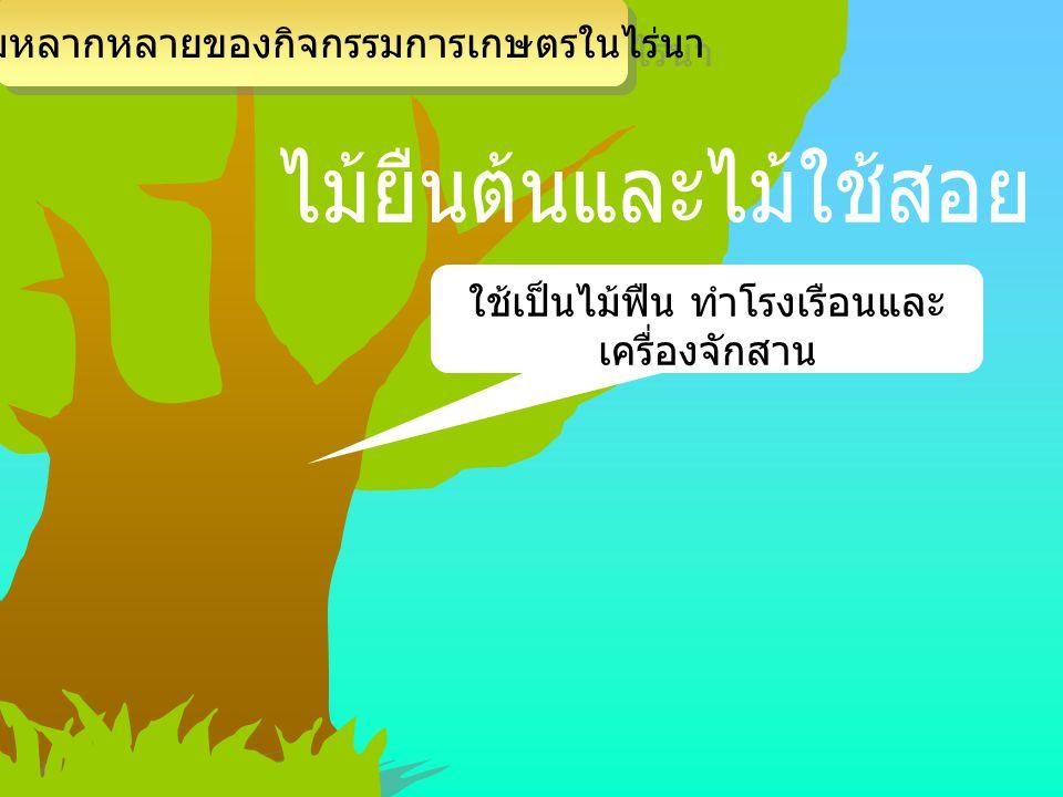 ไม้ยืนต้นและไม้ใช้สอย