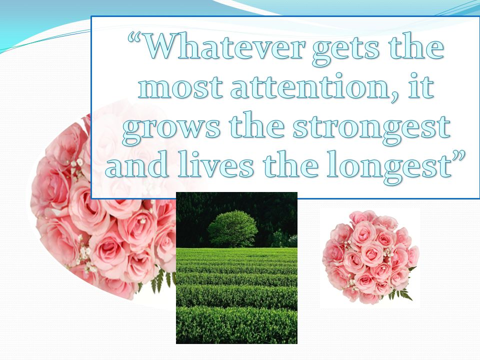 Whatever gets the most attention, it grows the strongest and lives the longest