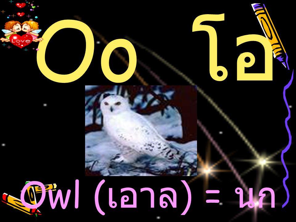 Oo โอ Owl (เอาล) = นกเค้าแมว