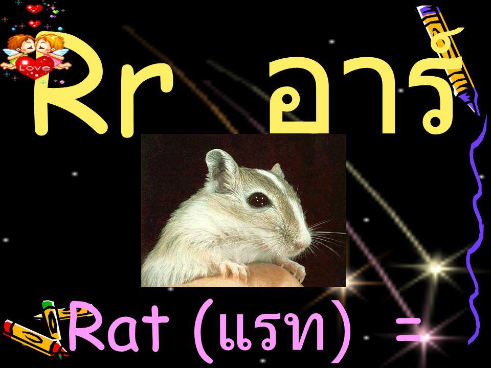 Rr อาร์ Rat (แรท) = หนู