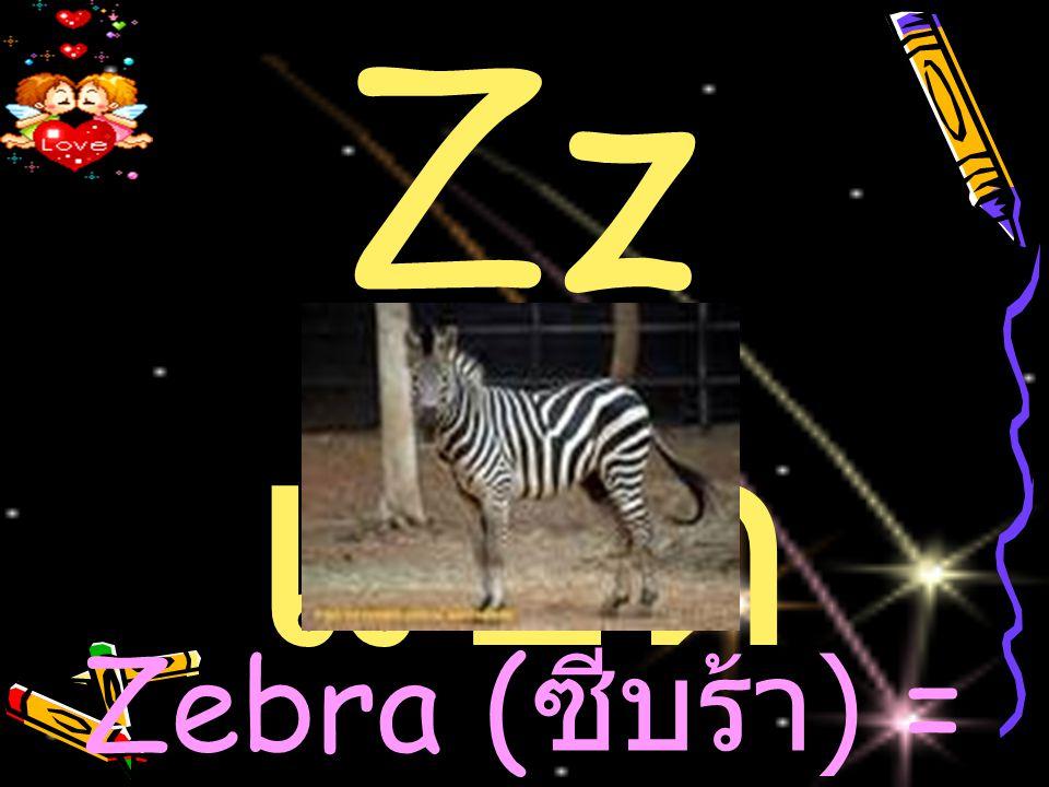 Zebra (ซีบร้า) = ม้าลาย