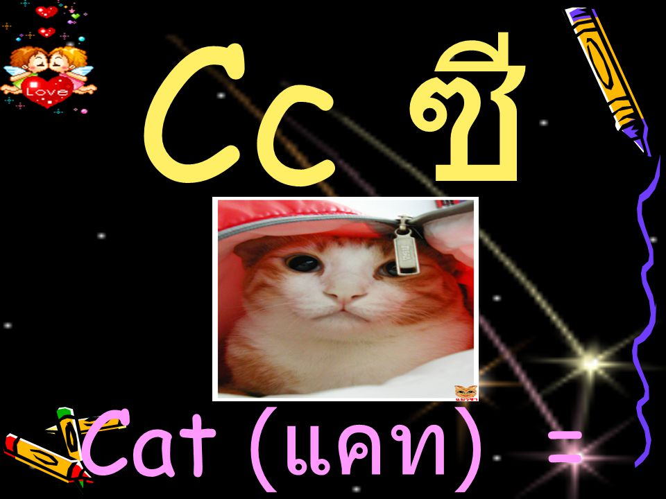 Cc ซี Cat (แคท) = แมว