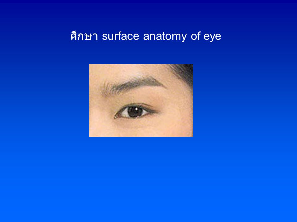 ศึกษา surface anatomy of eye