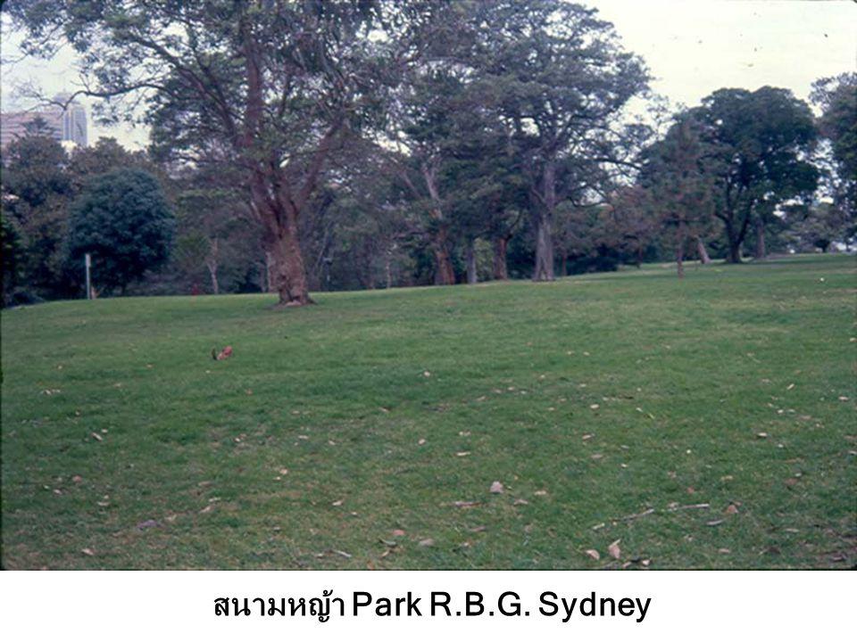 สนามหญ้า Park R.B.G. Sydney