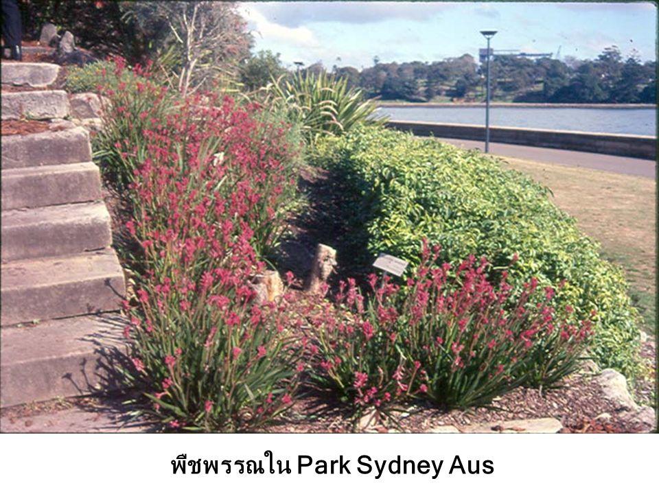 พืชพรรณใน Park Sydney Aus