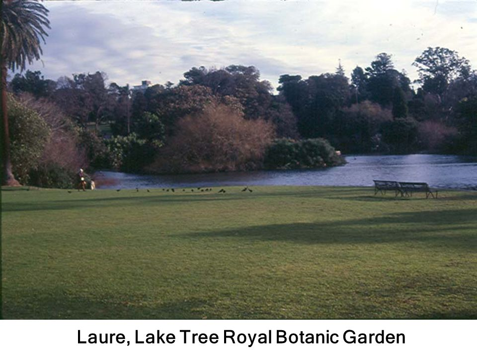 Laure, Lake Tree Royal Botanic Garden
