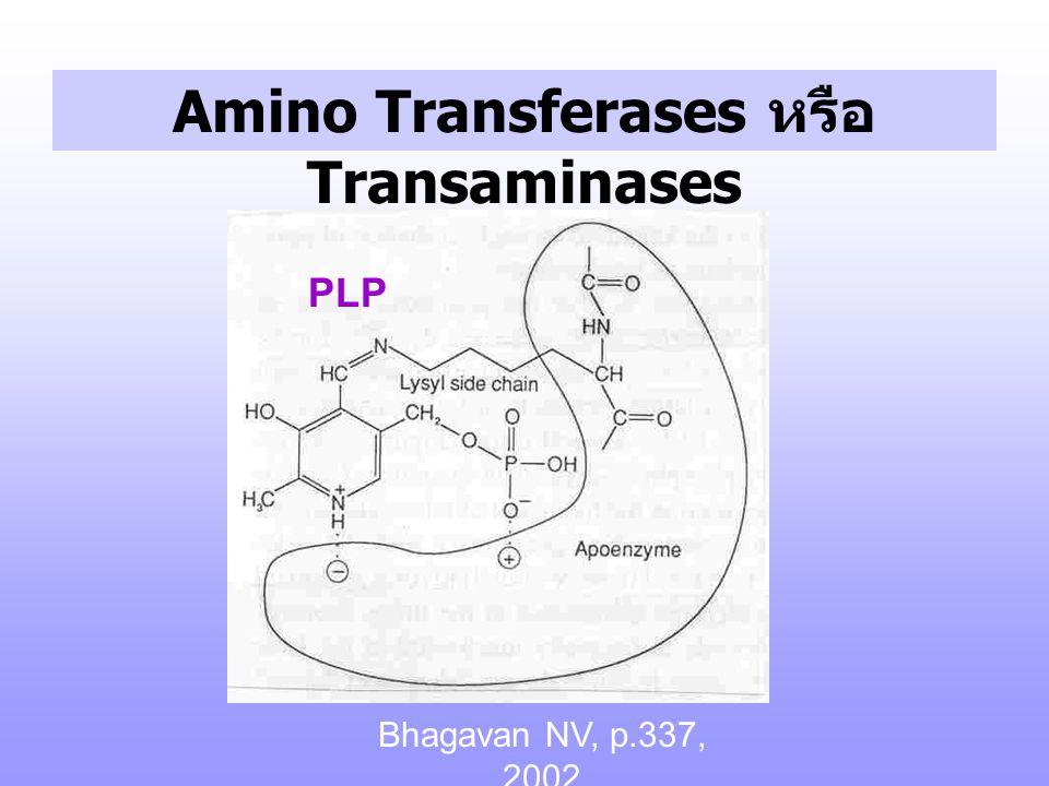 Amino Transferases หรือ Transaminases