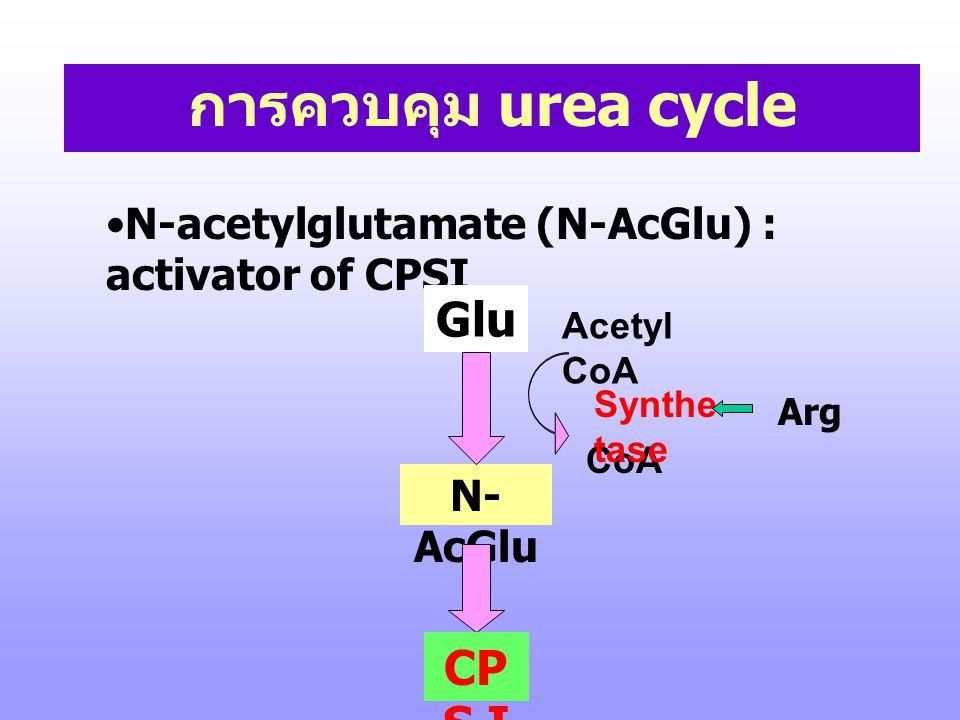 การควบคุม urea cycle Glu CPS I