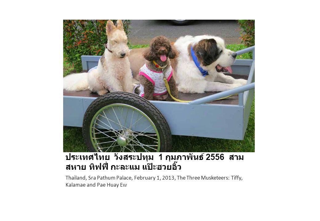 ประเทศไทย วังสระปทุม 1 กุมภาพันธ์ 2556 สามสหาย ทิฟฟี่ กะละแม แป๊ะฮวยอิ๊ว