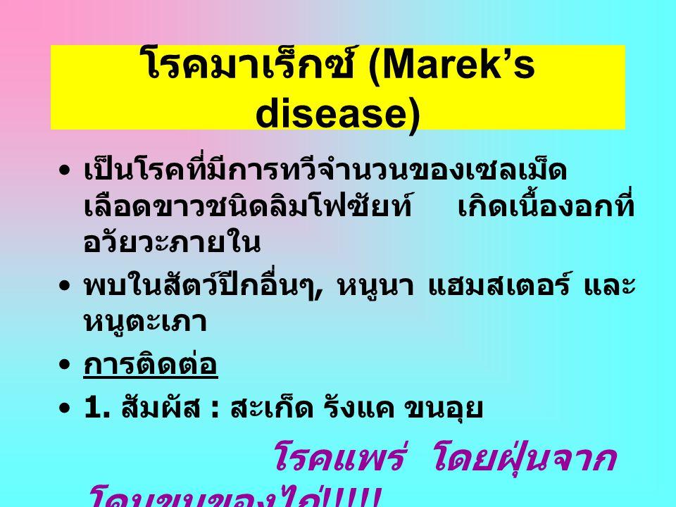 โรคมาเร็กซ์ (Marek's disease)