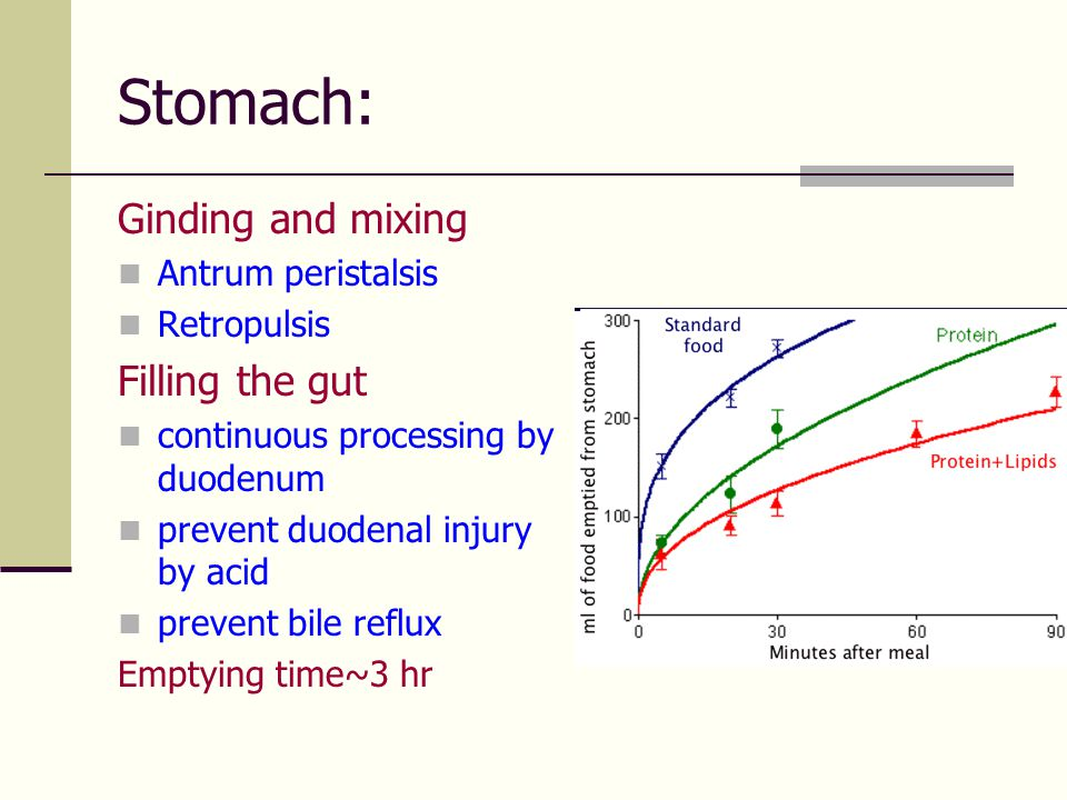 Stomach: Ginding and mixing Filling the gut Antrum peristalsis