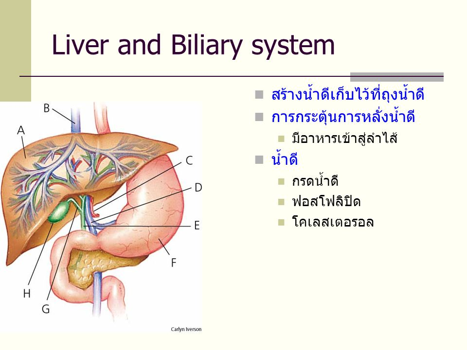 Liver and Biliary system