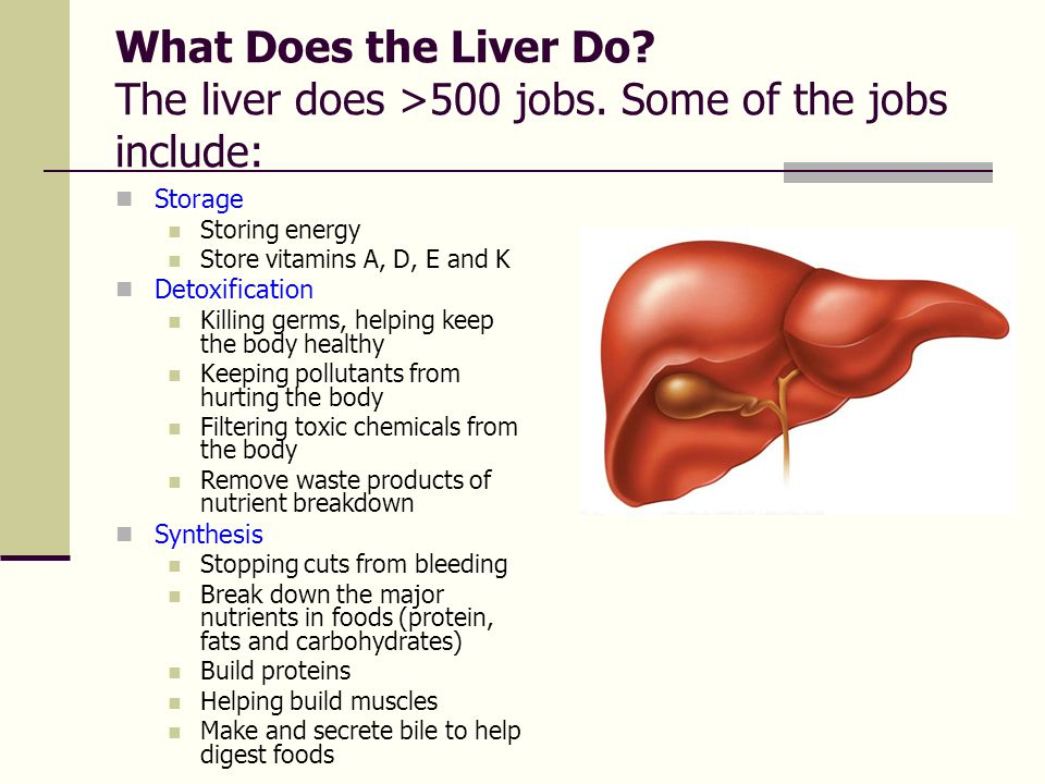 What Does the Liver Do. The liver does >500 jobs