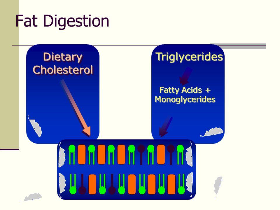 Fatty Acids + Monoglycerides
