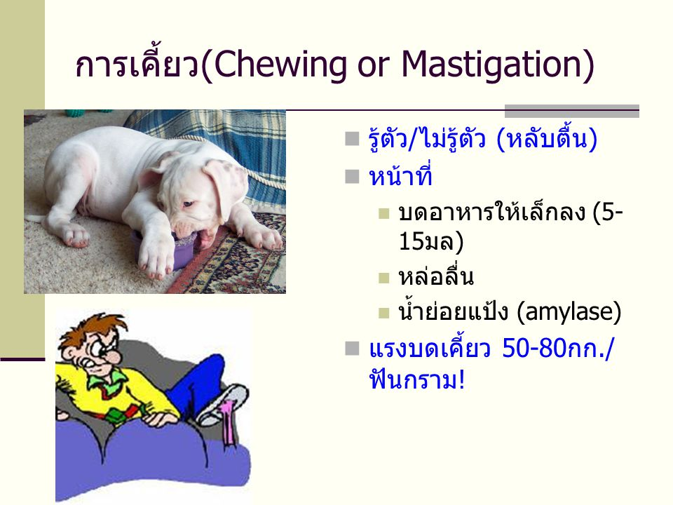 การเคี้ยว(Chewing or Mastigation)