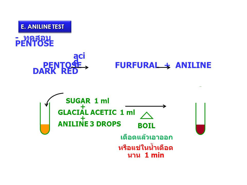 - ทดสอบ PENTOSE SUGAR 1 ml + GLACIAL ACETIC 1 ml + ANILINE 3 DROPS