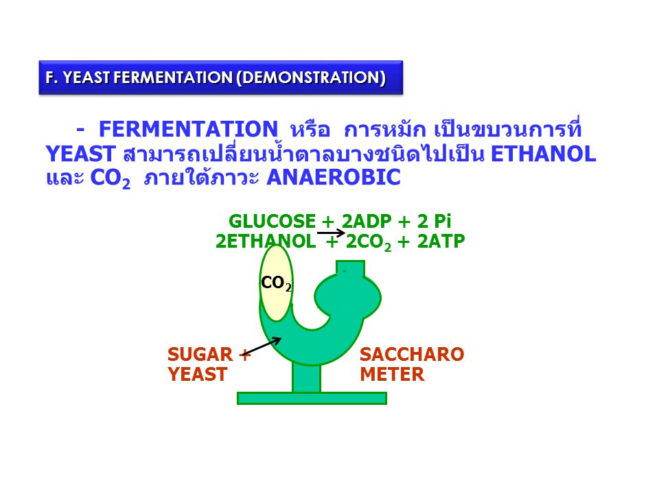 GLUCOSE + 2ADP + 2 Pi 2ETHANOL + 2CO2 + 2ATP