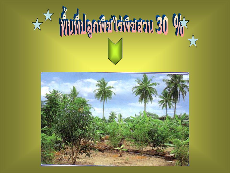 พื้นที่ปลูกพืชไร่พืชสวน 30 %