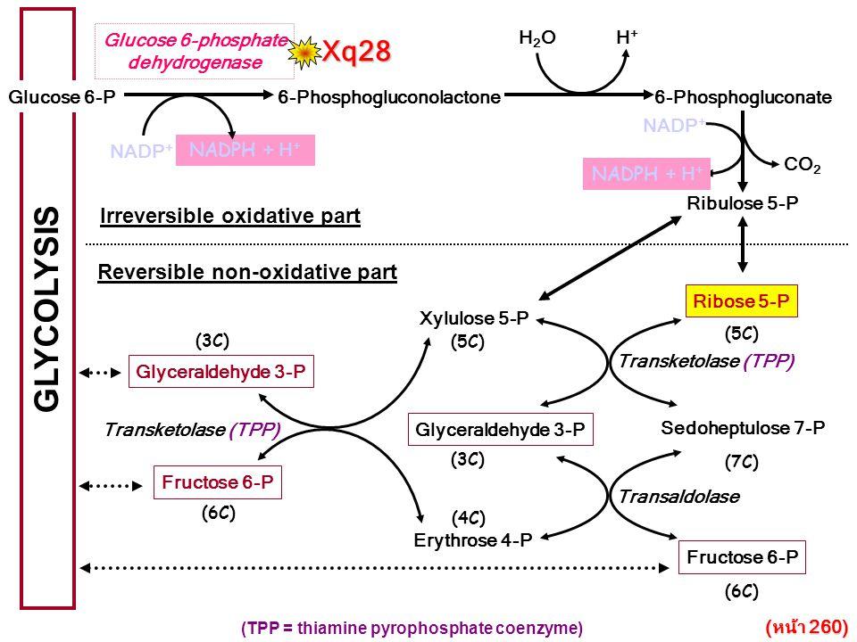 6-Phosphogluconolactone