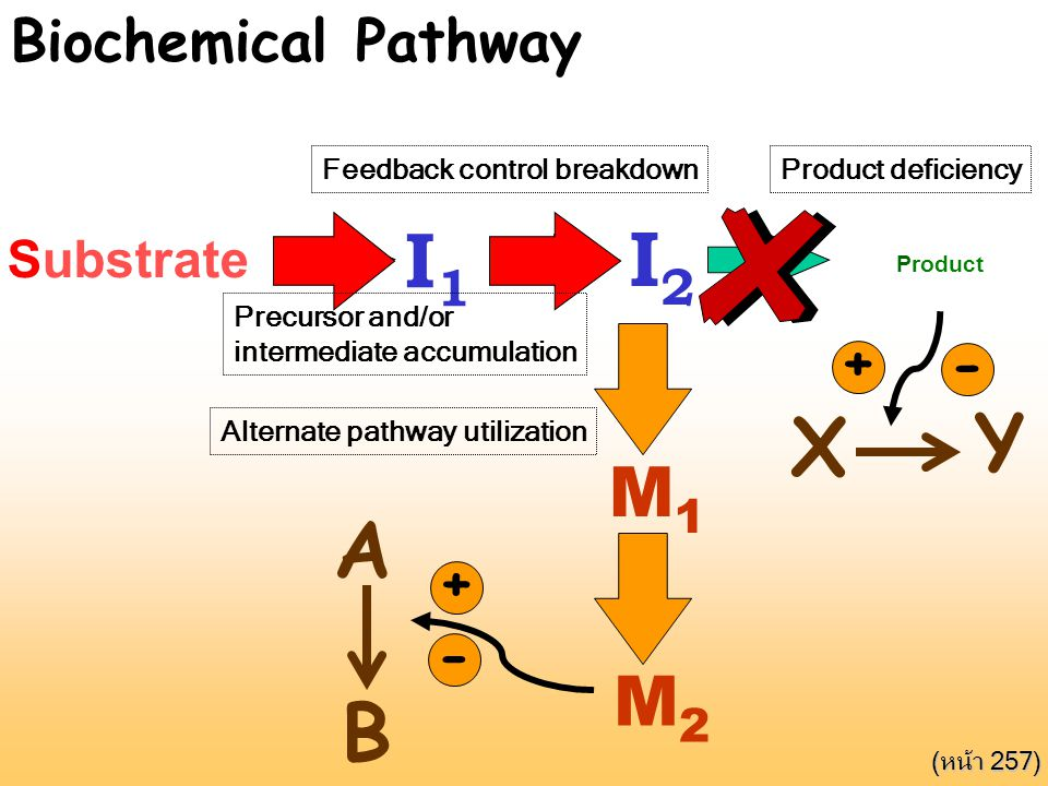 I1 I2 Y X A B M1 M2 Biochemical Pathway + - + - Substrate Product