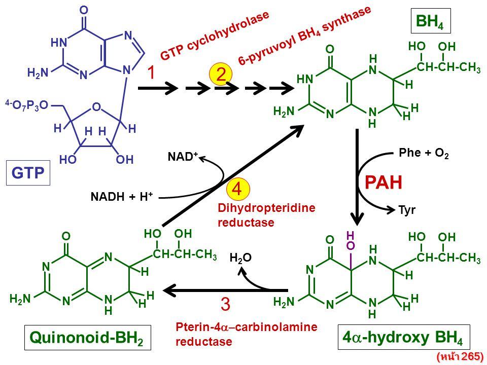 1 2 PAH 4 3 BH4 GTP Quinonoid-BH2 4a-hydroxy BH4 N HN O H2N H HO OH