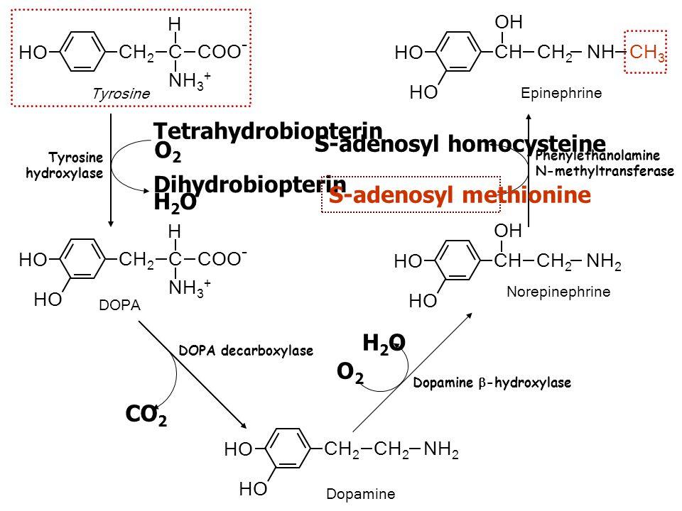 S-adenosyl homocysteine O2