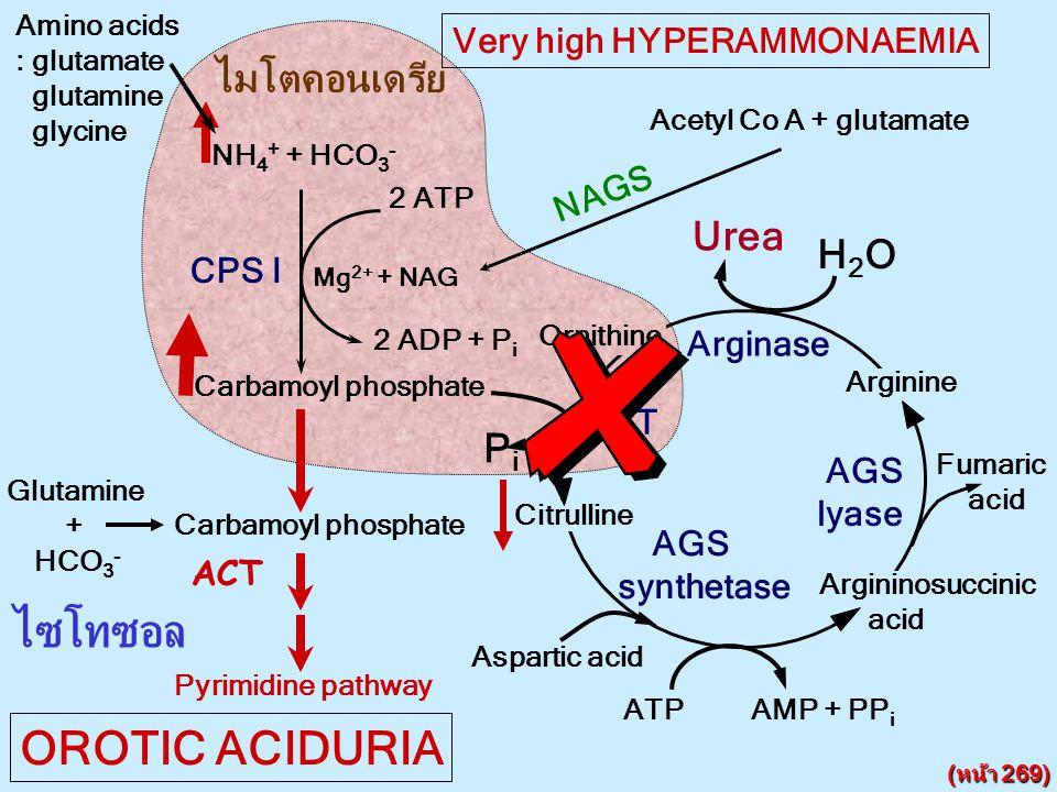 ไซโทซอล OROTIC ACIDURIA ไมโตคอนเดรีย Urea H2O Pi