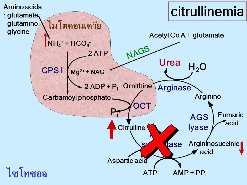 citrullinemia ไซโทซอล ไมโตคอนเดรีย Urea H2O Pi NAGS CPS I Arginase OCT