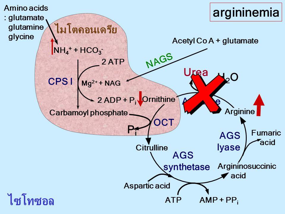 argininemia ไซโทซอล ไมโตคอนเดรีย Urea H2O Pi NAGS CPS I Arginase OCT