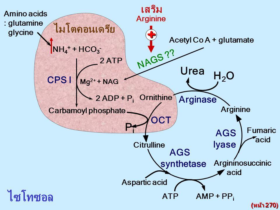 + ไซโทซอล เสริม ไมโตคอนเดรีย Urea H2O Pi NAGS CPS I Arginase OCT