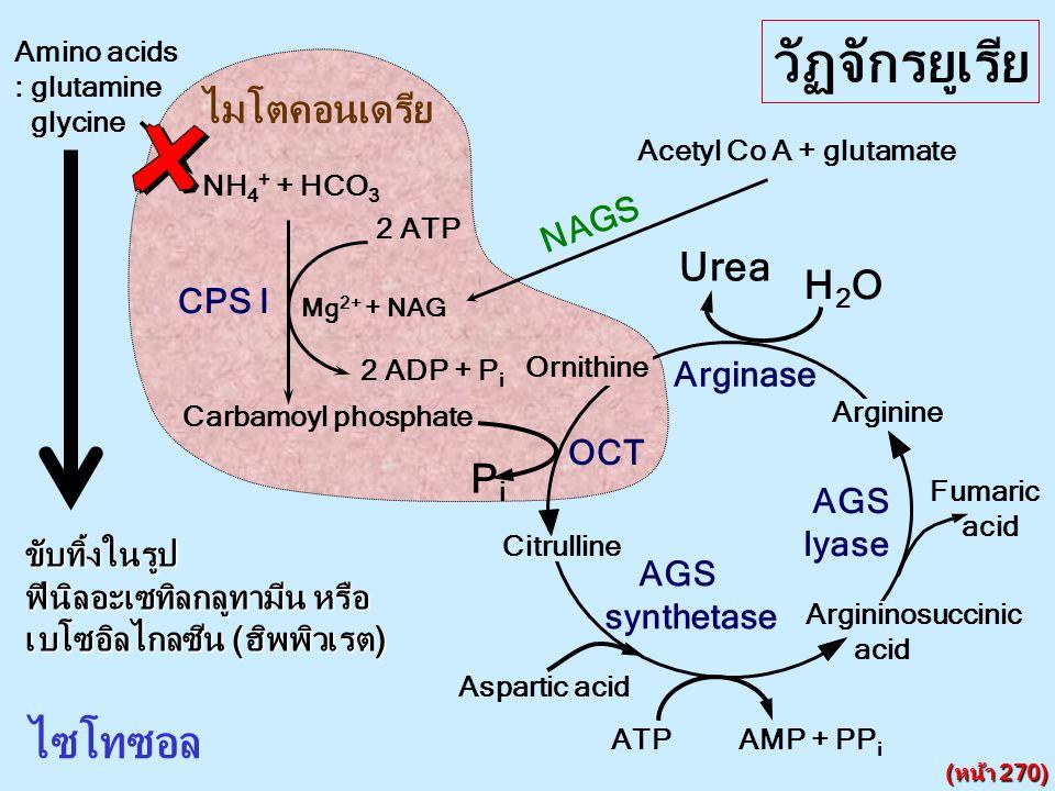 วัฏจักรยูเรีย ไซโทซอล ไมโตคอนเดรีย Urea H2O Pi NAGS CPS I Arginase OCT