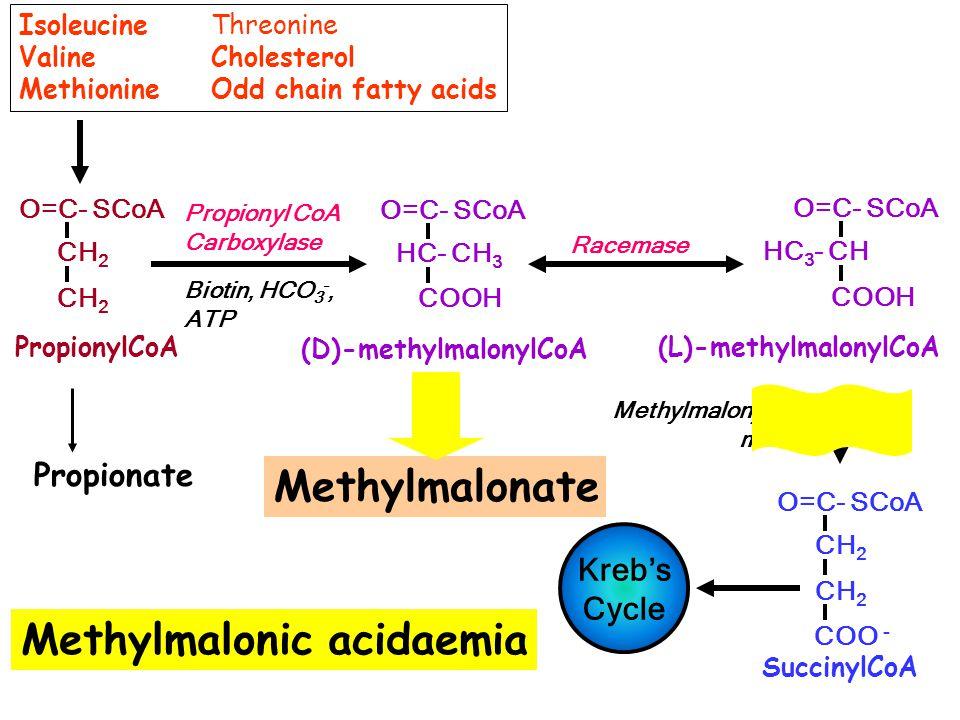 Methylmalonic acidaemia