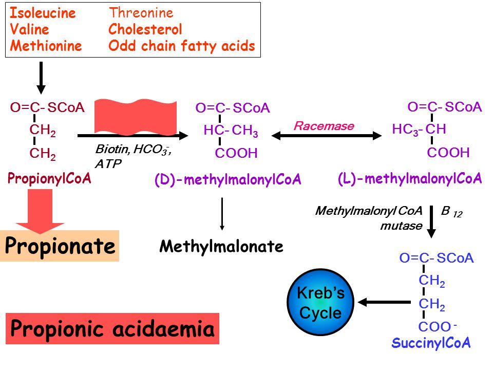 Propionate Propionic acidaemia Propionate Methylmalonate Kreb's Cycle