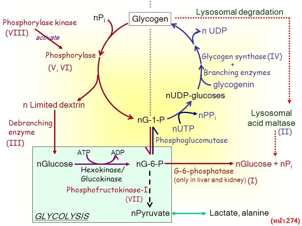 Lysosomal degradation nPi