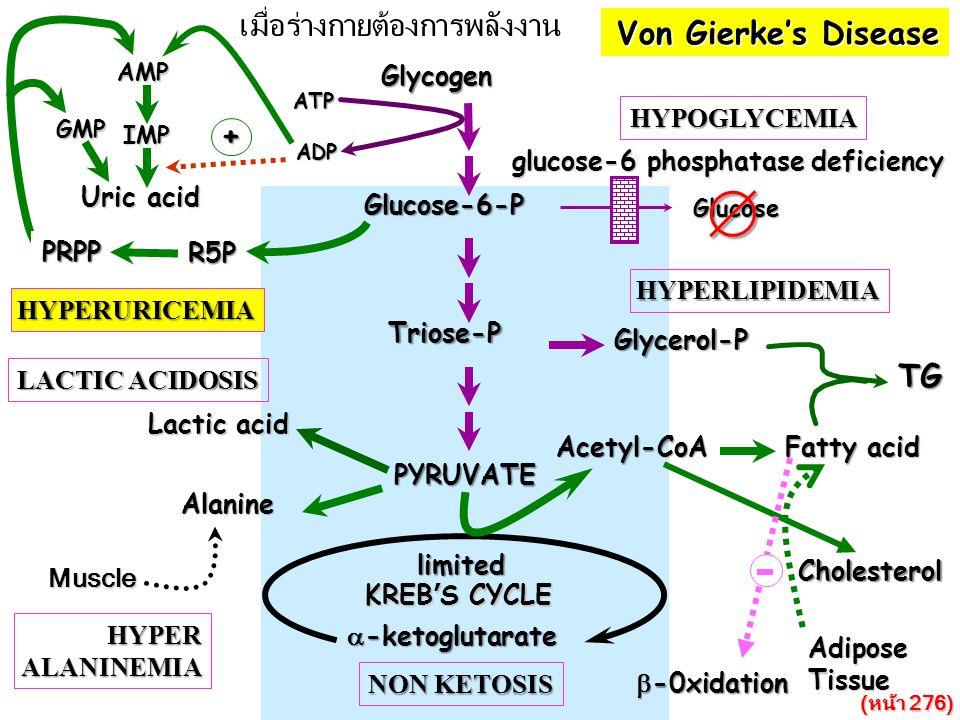  เมื่อร่างกายต้องการพลังงาน Von Gierke's Disease + TG Glycogen