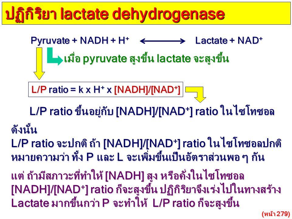 ปฏิกิริยา lactate dehydrogenase