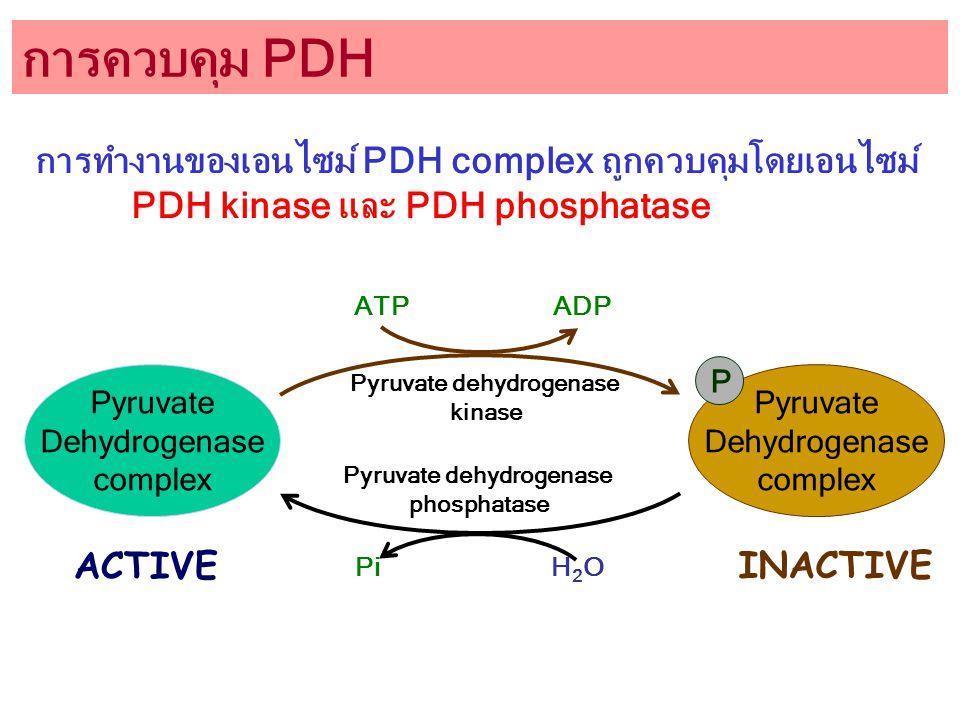 Pyruvate dehydrogenase Pyruvate dehydrogenase