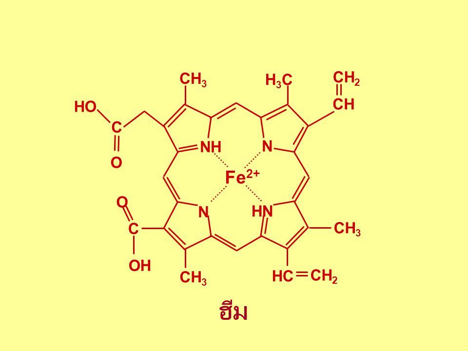 Fe2+ NH N HN H3C CH3 CH CH2 HC C OH O HO ฮีม