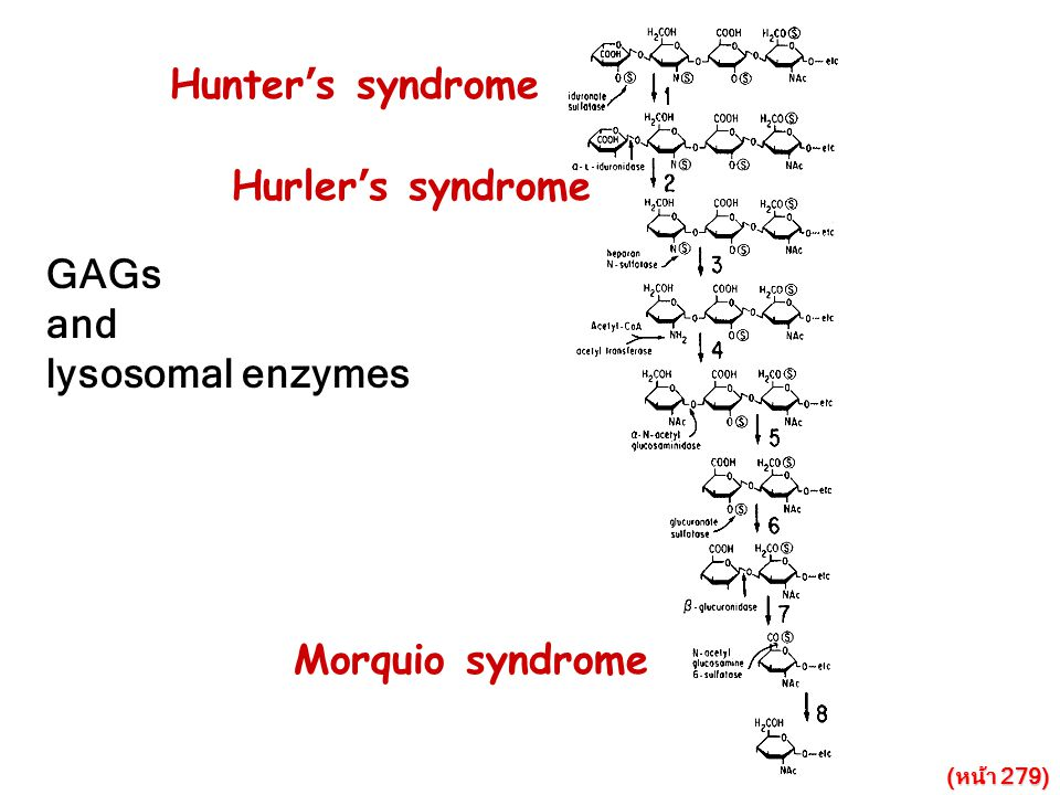 Hunter's syndrome Hurler's syndrome GAGs and lysosomal enzymes