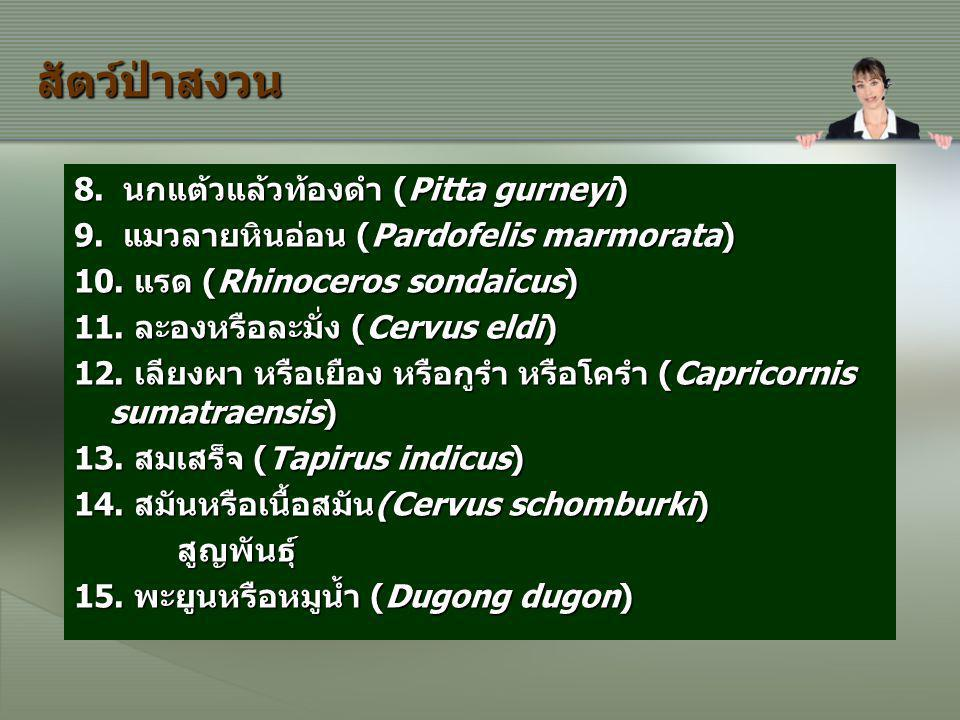 สัตว์ป่าสงวน 8. นกแต้วแล้วท้องดำ (Pitta gurneyi)