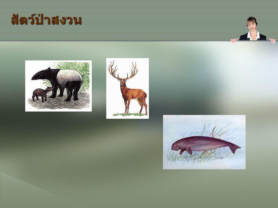 สัตว์ป่าสงวน