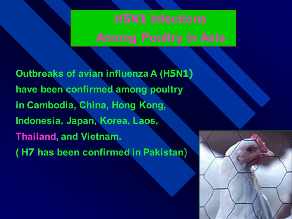 H5N1 Infections Among Poultry in Asia