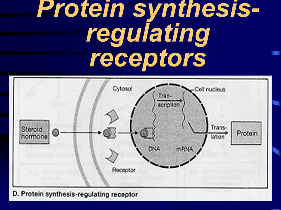 Protein synthesis-regulating receptors