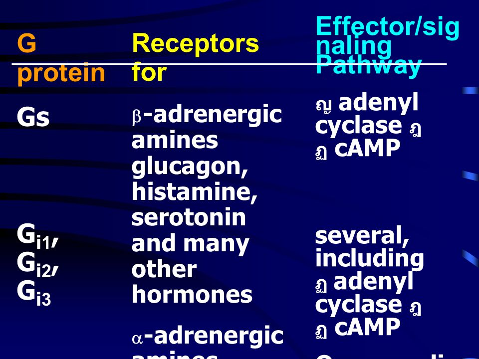 Effector/signaling Pathway G protein Gs