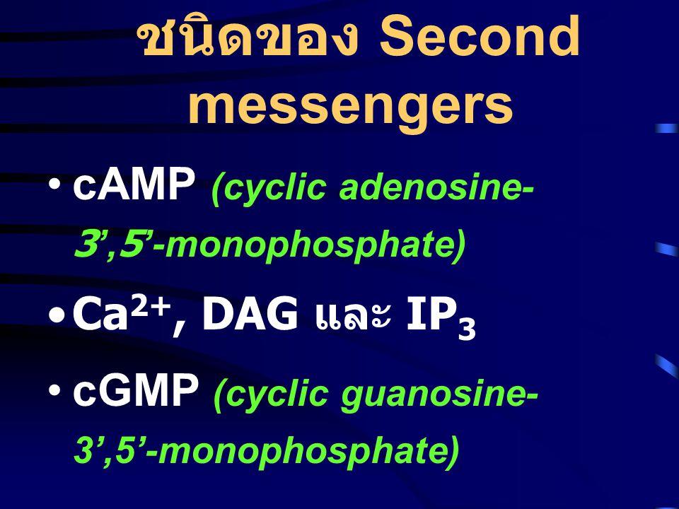 ชนิดของ Second messengers