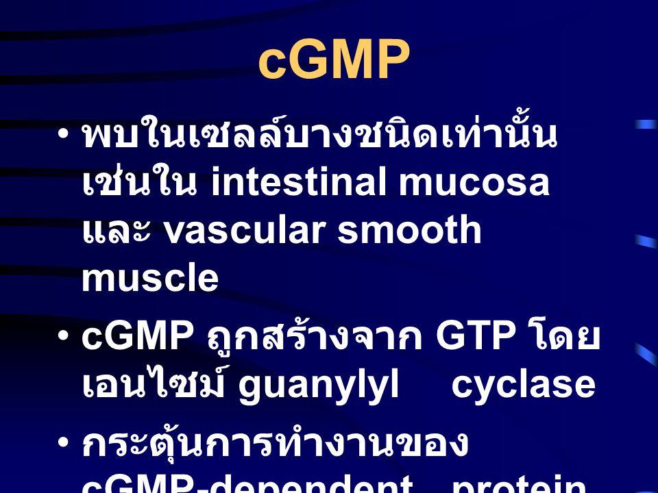 cGMP พบในเซลล์บางชนิดเท่านั้น เช่นใน intestinal mucosa และ vascular smooth muscle. cGMP ถูกสร้างจาก GTP โดยเอนไซม์ guanylyl cyclase.